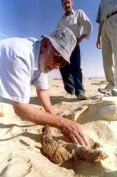 Bir Al-Ghaba Egypt western desert